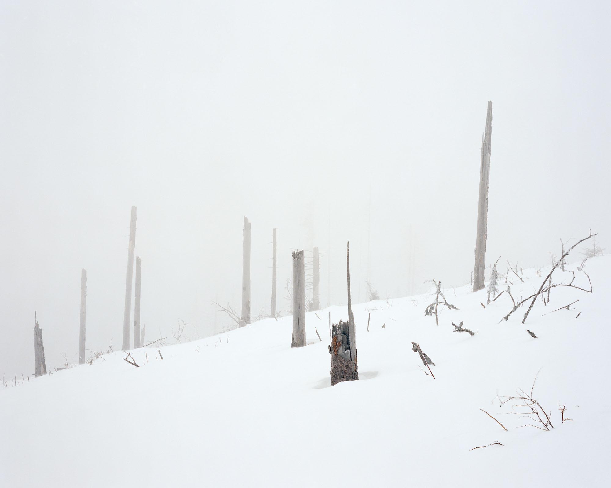 FF2019-white_n-image10